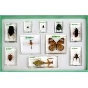 Rzędy owadów