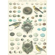 Cavallini Papers Co. Poster Nests And Eggs
