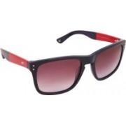 Tommy Hilfiger Wayfarer Sunglasses(Pink)