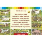 Set planse animale domestice