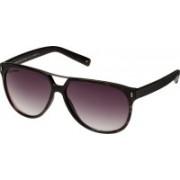 Joe Black Aviator Sunglasses(Violet)