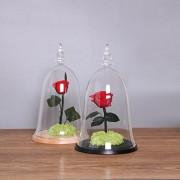 ELECTROPRIME Glass Bell Shape Cover Landscape Bottle Vase Black Tray Flowers Planter Gift