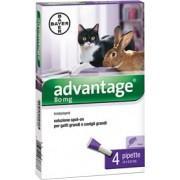 BDV Advantage 80 macska nagy 0,8ml a.u.v - 4x