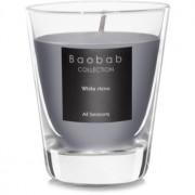 Baobab White Rhino lumânare parfumată (votive) 6,5 cm