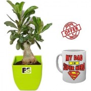 ES DECORATIVE ADENIUM LIVE PLANT With Freebies Mug