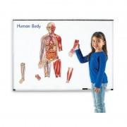 Corpul uman set magnetic