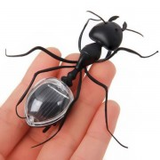 Educational Solar powered Ant Energy-saving Model Toy Children Teaching Fun Insect Toy Gift
