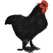 Decoris Dierenbeeld zwarte kip vogel 30 cm staande decoratie