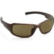 Harley Davidson Round Sunglasses(Brown)