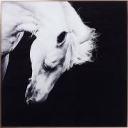 Kare Wanddeco Alu Proud Horse 100x100 cm