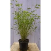 Warentuin Natuurlijk Bamboe niet woekerend 120 cm