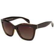 INVU Wayfarer Sunglasses(Brown)