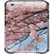 Ipod Skin Design 94