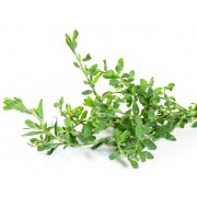 AWA herbs rdesno truskavec nať 100g
