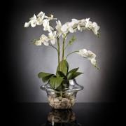 Aranjament floral LIGHT ATOLLO 2 PHALENOPSIS MEDIUM