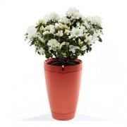 Parrot Flower Pot - интелигентна саксия, грижеща се за вашите растения за iOS и Android (червен)