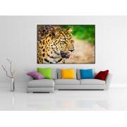 Tablou canvas leopard - cod P05