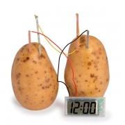 Potatisklocka Experiment