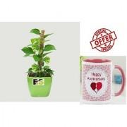 ES BIG ES MONEY PLANT With Gift Anniversary Gift Mug