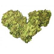 Green Love Canapa Fiore