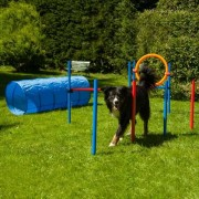 PROCYON Dog Agility Set K2