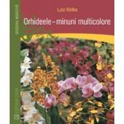 Orhideele – minuni multicolore.
