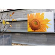 Tuinposter 4cm frame 70x210 cm