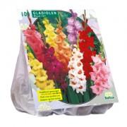Gladiool Gladiolen Gemengd