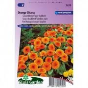 Calendula Officinalis zaden Orange Gitana goudsbloem