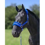 HB Soft Halster met tekst - royal blue - Size: COB