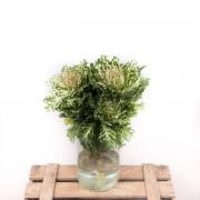 Bicolor Crane-Flores ao domicílio