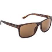 Frank Martin Wayfarer Sunglasses(Brown)