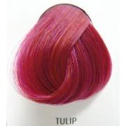 szín haj DIRECTIONS - Tulip