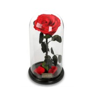 Para Ella Preserved Fresh Rose Flower with Fallen Petals in Glass Dome on a Wooden Base as Gift for Valentine's Day, Anniversary, Birthday , Wedding