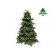 iGarden Triumph Tree Abies Nordmann de Luxe Green 185