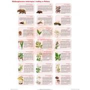 Niebezpieczne zwierzęta i rośliny w Polsce - plansza