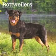 Tuinland Kalender 2021 Rottweilers