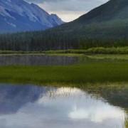Dell LCD monitor Dell C5519Q, 139.7 cm (55 palec),3840 x 2160 px 8 ms, VA LCD audio, stereo (jack 3,5 mm), VGA, DisplayPort, HDMI™, USB, RS232, RJ45