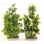 Plante Sydeco Ap Giant - 50cm 349706