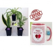 MIX INDOOR PLANT NATURAL COMBO FOR HOME With Gift Anniversary Gift Mug