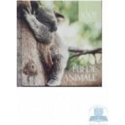 1001 de fotografii - Pui de animale