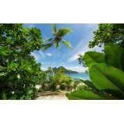Komar Cast Away Jungle Vlies Fotobehang 450x280cm 9-banen