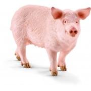 Porc, Mascul