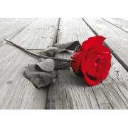 Fototapet FTM 0819 Trandafir rosu