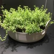 SMD Design Tivoli 50 blomkruka (Produkt: Vit Low)