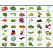 Combo Pack Of 40 Vegetable Seeds For Terrace And Kitchen Gardening by SapRetailer
