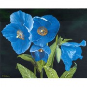 IMFPA Blue Eyed Flowers Painting