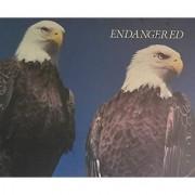Bald Head Eagles Puzzle 550 Pieces