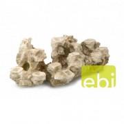 EBI AQUA DELLA CORAL REEF XXXL 65x25x21cm, for 15 corals