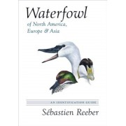 Waterfowl of North America, Europe, and Asia: An Identification Guide, Hardcover